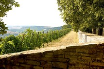 Romanesque Road + Wine Trails