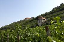Genießen Sie unsere Weine im historischen Terrassenweinberg.